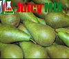 JM Pear Conference 5ml
